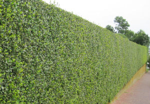hedge-cutting-maintenance-bayswater